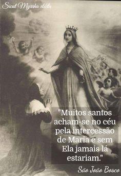 Sicut Myrrha electa Catholic Quotes, Majestic Animals, Blessed Mother, Spiritual Inspiration, Roman Catholic, Virgin Mary, Mystic, Saints, Religion