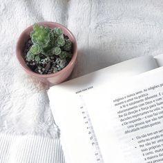 Bom dia alegria, bom dia quinta feira, ótimo dia pra vocês seus lindos ❤❤❤❤ muito amor pra nós🌵 . . . . . . #suculentas #suculents #cactos #cactilove #cactusclub #cactuslover #cactosesuculentas #nature #livro #suculentasycactus #suculove #suculentasbr #home #decor