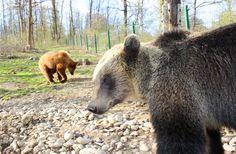 Residents of the Romanian Bear Sanctuary, Zarnesti, Romania.