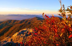 Fall sunrise on the Blue Ridge Parkway at Craggy Gardens near Asheville NC