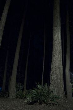 Trees at night grow forever. Townie Bike, Night Forest, Night Aesthetic, Forest Photography, Night Vale, Dark Forest, Motorcycle Baby, Motorcycle Mechanic, Aesthetic Pictures