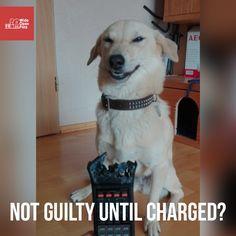 He's totally innocent.