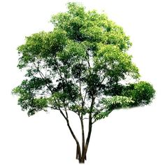 tree ❤ liked on Polyvore featuring trees, flowers, plants, nature and tubes