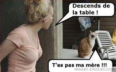 Il est un peu susceptible ce chat quand même :)