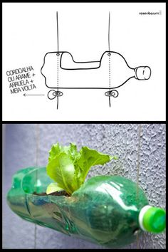 Hanging planter made out of reused soda bottle.