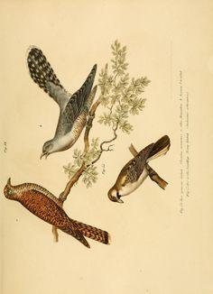Bilder-atlas zur Wissenschaftlich-populären Naturgeschichte der Vögel in ihren sämmtlichen Hauptformen. - Biodiversity Heritage Library