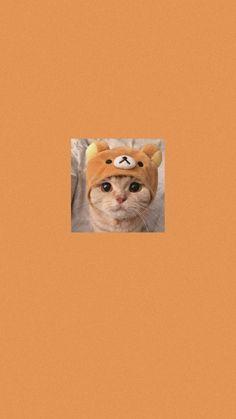 Wallpaper Iphone Cute, Issa, Spongebob, Cool Photos, Backgrounds, Peach, Wallpapers, Orange, Cats