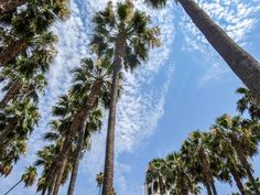Los Angeles i Las Vegas - co warto zobaczyć? Venice Beach, Santa Monica, Rodeo, Palazzo, Beverly Hills, Las Vegas, San Francisco, Plants, Last Vegas