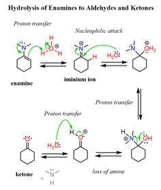 Imine and Enamine Hydrolysis Mechanism - Chemistry Steps Organic Synthesis, Problem Set, Organic Chemistry, Science And Nature, Alcohol, Astronomy, Tips, Chemistry, Biology