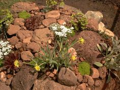 How to Build Great Rocks Gardens for Small Spaces: Photo of the Final Version of the Rock Garden