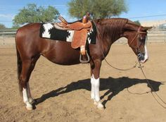 Overlook Amore Arabian Mare.. WOW this mare has a pretty head