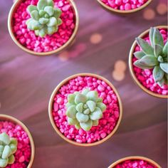 Wedding Favors: individual potted succulents with colored rocks to match your theme. Spray paint pots gold for a classy touch.