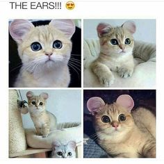Funny animal pictures compilation for you. Check these top 44 hilarious animal pictures of the day that will make you LOL every time. Cute Animal Memes, Animal Jokes, Cute Memes, Funny Animal Pictures, Cute Funny Animals, Funny Cute, Cute Cats, Pretty Cats, Kittens Cutest