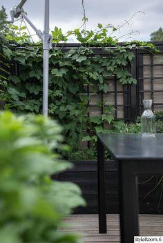 Rivitalopiha - Sisustuskuva jäseneltä jaana_k - StyleRoom. Terrace, Plants, Image, Balcony, Patio, Plant, Decks, Outdoor Cafe, Planets