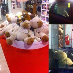 Teddy mania
