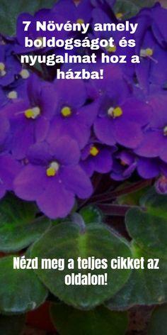 7 Növény mely vonzza a pozitív energiát - Funland