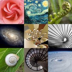 Fibonacci Sequence. Symbols connect us to mystery and to the very farthest horizons of conceivable meaning.