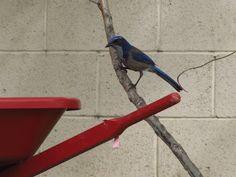 Kid-Friendly Tips for Backyard Bird Watching
