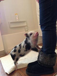 Seriöst, tycker du inte att grisar är söta? Då har du inte sett de här 25 bilderna. Vilken sötchock! https://delbart.se/gulliga-grisar/