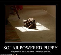#Solar-charged puppy. Requires 8-10 hours of charging.