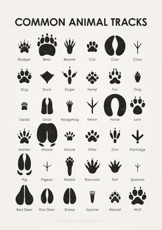 Sheets for the identification of different leaves, animal tracks and flying birds, in German and English.  Posters and Prints available at Posterlounge (also via Amazon or eBay), Artflakes and Søciety...