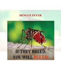 DENGUE FEVER   Knowledge, Attitude and Practice of Dengue Fever among general population of Karachi GROUPA3 SUPERVISOR: DR. KIRAN MEHTAB RESEARCHERS: Aksh. http://slidehot.com/resources/a3-merged-research-writing-docx-mam.31006/