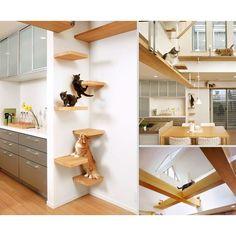 ¿Quieres que tu casa le de la bienvenida a tus gatitos? Aquí tienes 22 muebles que harán que tus gatos te adoren.