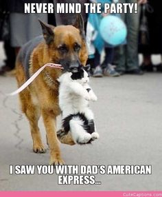 Funny Animal Pictures - View our collection of cute and funny pet videos and pics. New funny animal pictures and videos submitted daily. Cute Funny Animals, Funny Animal Pictures, Funny Dogs, Cute Cats, Dog Pictures, Funny Humor, Dog Humor, Animal Pics, Funny Images