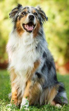 Bodil & Luuk's hond Benji