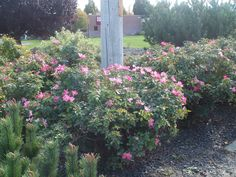 pt 16 10/12/13 flowers in front of st alphonsus hospital. nampa idaho