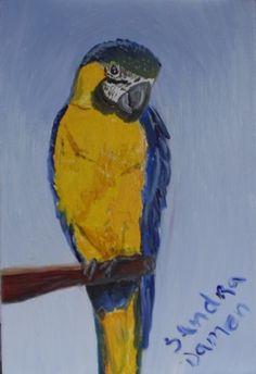 Blauw gele ara