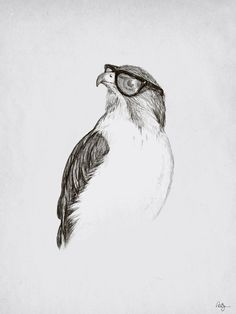 'Hawk with Poor Eyesight' art print by Phil Jones.  Could be entitled 'Hipster Hawk'.