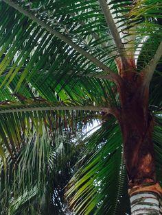 Hojas de palmera