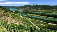 Vineyard, France, Outdoor, Outdoors, Vine Yard, Vineyard Vines, Outdoor Games, The Great Outdoors, French