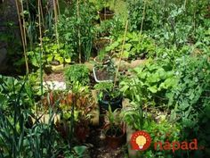 There are numerous educational benefits of encouraging children to interact with nature! This is our guide to growing a school vegetable garden. Cilantro Plant, Chives Plant, Growing Sweet Peas, Growing Herbs, Vegetable Garden, Garden Plants, Culture D'herbes, Growing Raspberries, Vegetables Garden