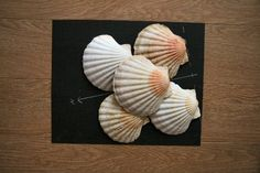 Coquille St Jaques, Support, Feng Shui, Daisy, Saints, My Favorite Things, Deco, Elemental Magic, Witch Spell Book