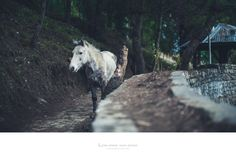 """https://flic.kr/p/25k4ugY 