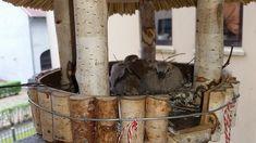 Wer mir auf Facebook oder Instagram folgt, hatte bereits im letzten Jahr mit bekommen, wir hatten Türkentauben auf unserem Balkon. Nun ist es wieder soweit und unser Vogelhaus ist besetzt. Daher empfehle ich euch heute meinen Beitrag vom letzten Jahr dazu.   #Balkon #Brüten #Bundesnaturschutzgesetz #Flügge #Jungtauben #Nachwuchs #Nest #Tauben #Türkentauben #Vögel