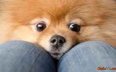 Clever chiens de race de chien de photo
