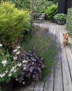 Wooden deck and & # Summersnow & # Almbacken Garden design Terrace Garden, Garden Pots, Back Gardens, Outdoor Gardens, Terrariums Diy, Potted Plants Patio, Exterior, Plantar, Dream Garden