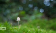 On a Bed of Green - Pinned by Mak Khalaf Nature autumnbokehforestgrassgreenlightmushroommycenawhite by -dgs-
