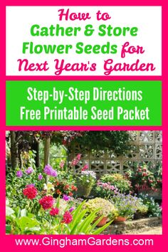 Seed Saving is a fun, easy and frugal gardening task. Learn how to collect flower seeds and how to Save Seeds. Includes a Free Printable Seed Packet and a Printable Seed Inventory Sheet, plus a list of the easiest annual and perennial flower seeds to save. #seedsaving #howtosaveseeds Balloon Flowers, Bulb Flowers, Garden Steps, Easy Garden, Gardening For Beginners, Gardening Tips, Flower Gardening, Seed Storage, Vegetable Garden Tips