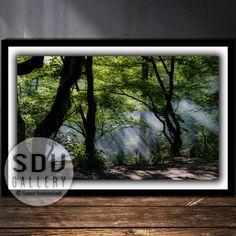 Downloadable image, digital photo, printable wall art, smoke in the forest, sunlight, sunshine, forest, spring, tree, smoke, Vienna, Austria Spring Landscape, Sunset Landscape, Beautiful Landscape Photography, Nature Photography, Photography Tips Iphone, Forest Scenery, Creative Landscape, Black And White Landscape, Printable Wall Art