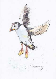 ARTFINDER: Landing puffin - Daily Bird #16 by Luci Power - Original Pen and Ink drawing with watercolour of a Landing puffin, drawn and painted in March 2016, using watercolour paper, Indian ink, dip pen and Schminke...