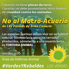 Los Verdes inician campaña de acciones y denuncias contra el Macro-Acuario de Las Palmas de Gran Canaria
