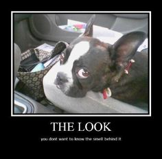 .... The fart look that all Boston terrier owners know too well! My baby Boswell:)