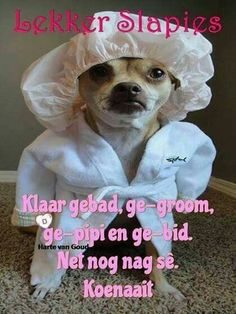 Good Night Wishes, Good Night Sweet Dreams, Good Night Quotes, Afrikaanse Quotes, Goeie Nag, South Africa, Good Morning, Memes, Animals