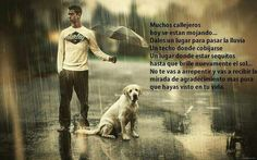 This guy protects his labrador with an umbrella during a rainy day. Mans Best Friend, Best Friends, Under The Rain, Dog Wallpaper, Free Dogs, Dancing In The Rain, Cat Breeds, Dog Owners, I Love Dogs