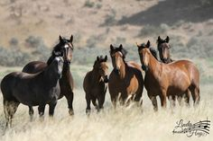 Take Action | American Wild Horse Campaign