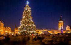 Christmas in Czechia - České Budějovice Christmas Tree, Holiday Decor, Xmas Tree, Xmas Trees, Christmas Trees